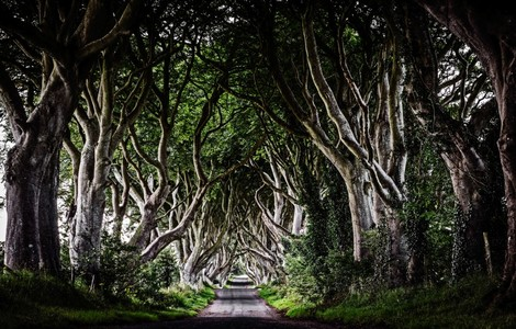 The Dark Hedges, uno dei luoghi di Game of Thrones