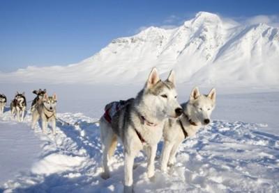 Cani da slitta in Lapponia ©Foto Anders Ekholm/Nordicphotos