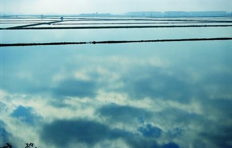 Risaia in Piemonte ©Foto Regione Piemonte