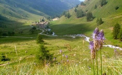 Passo del Tonale, tra natura e relax