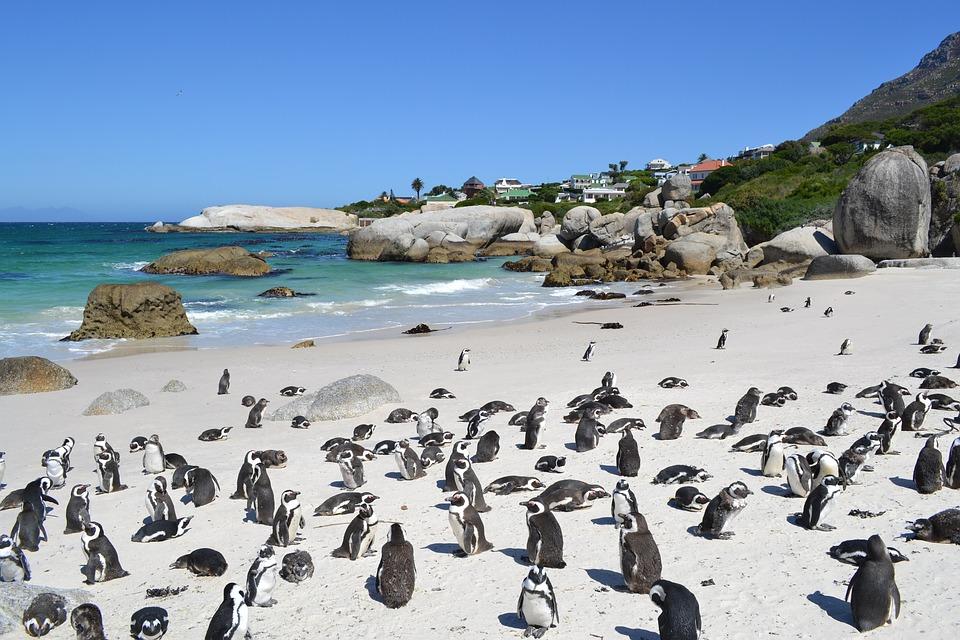 Città del Capo, pinguini