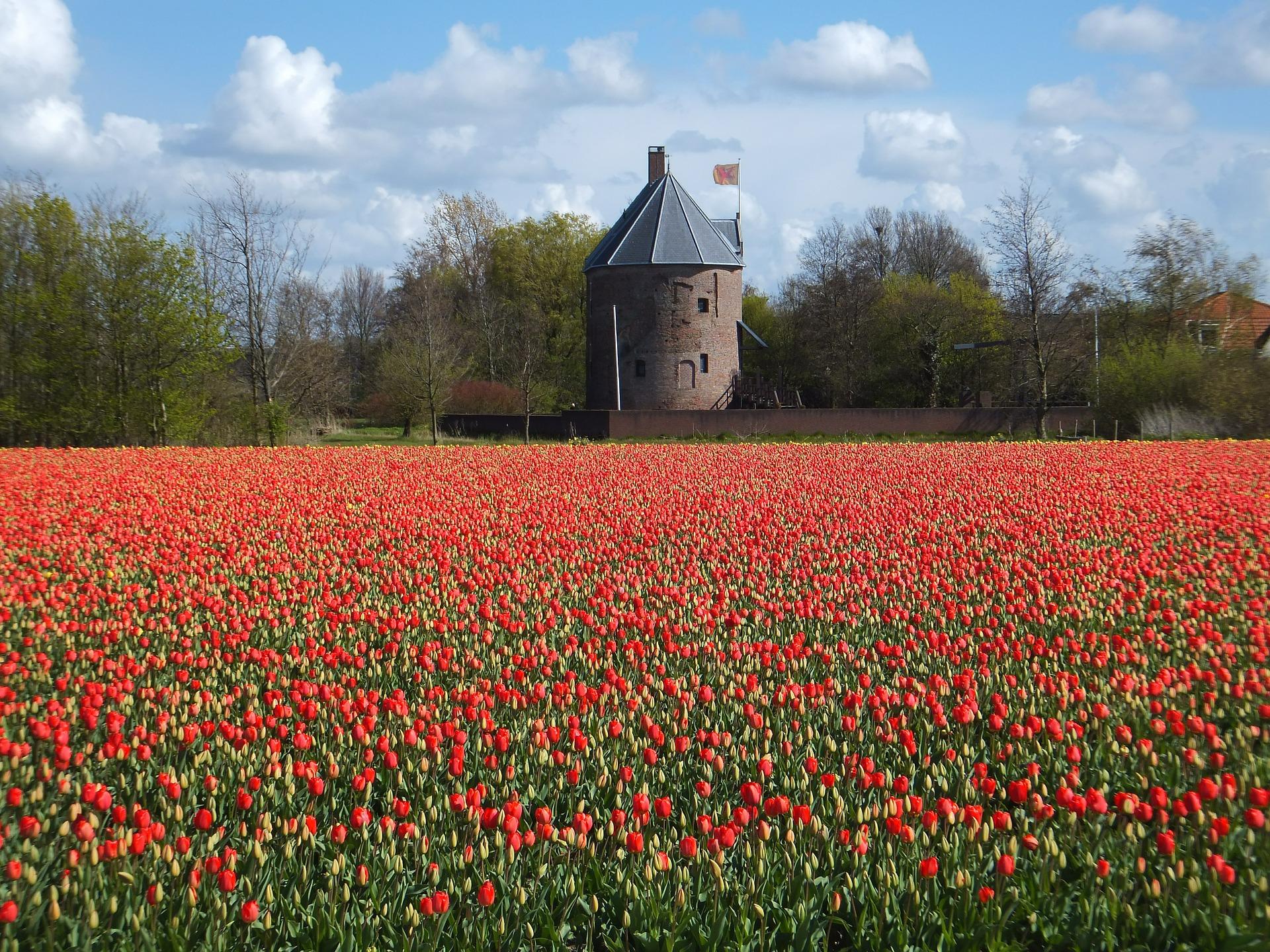 Campi di tulipani in Olanda - Foto di Jmpoppelier da Pixabay