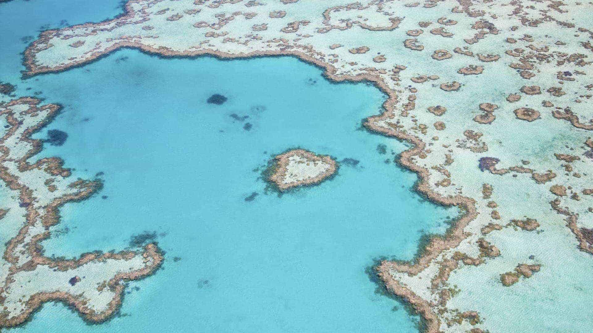 Grande Barriera Corallina, Cairns - Australia