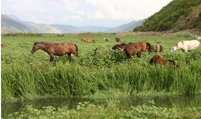 Cavalli allo stato brado in Albania. Foto: © National Tourist Organisation of Albania
