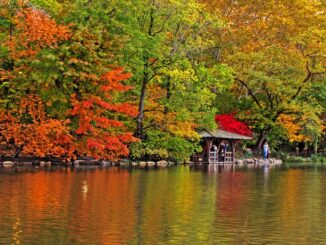 Central Park in autunno - ph Alex from NY via Wikipedia