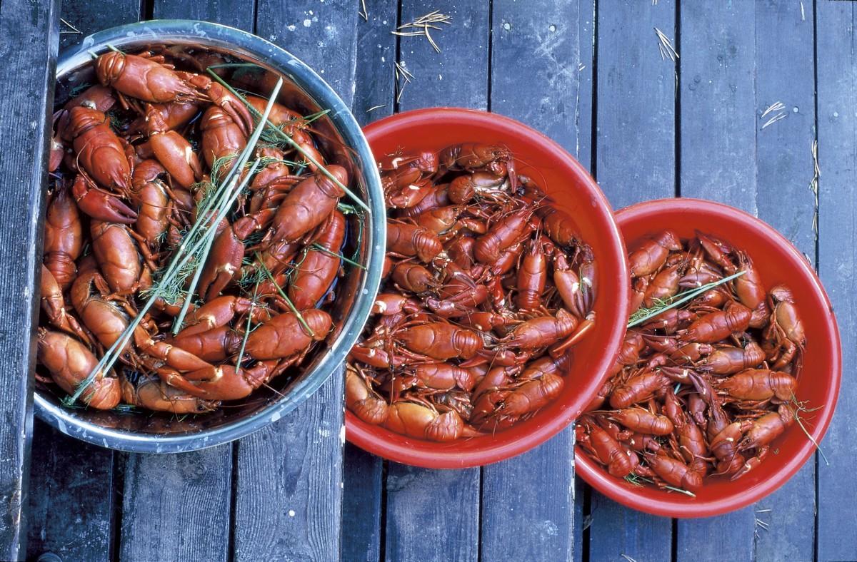 Cosa Cucinare Ad Agosto cucina finlandese, piatti tipici finlandesi * fulltravel