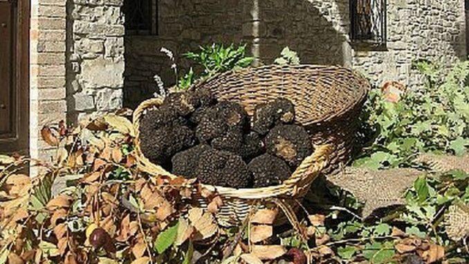 Fiera del tartufo nero di Fragno