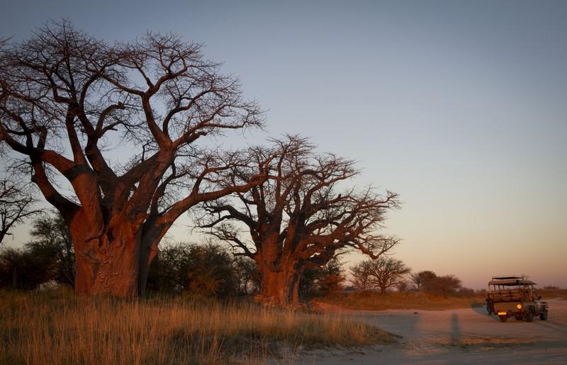 Baobab in Botswana - Ana Isabel Alia via Wikipedia - licenza Creative Commons Attribuzione-Condividi allo stesso modo 4.0 Internazionale
