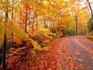 Foliage in Pennsylvania lungo la strada