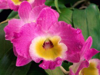 Mostra Orchidee Bussolengo, Verona