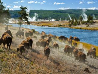 Il Parco Nazionale Yellowstone