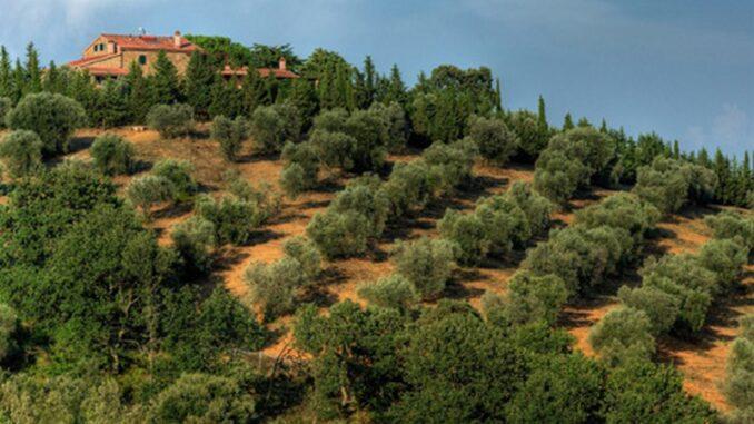 Montebelli Agriturismo e Country Hotel di Caldana