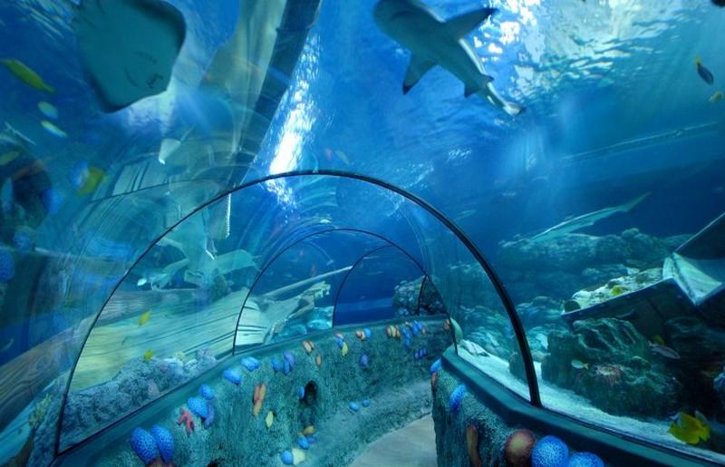 Vita marina presso il Gardaland SEA LIFE Aquarium - ph Gardaland SEA LIFE Aquarium