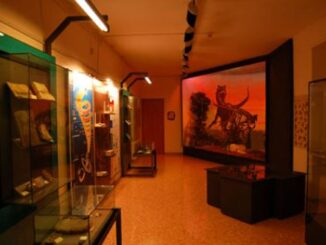 Museo provinciale di storia naturale