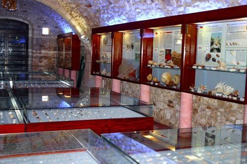 Museo malacologico di Vieste