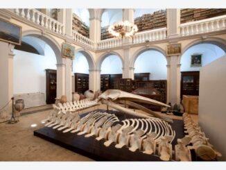"Museo civico ""Emanuele Barba"""