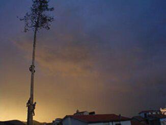Museo dei culti arborei