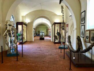 Museo di storia naturale dell'Università di Firenze