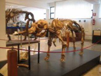 "Museo di paleontologia e geologia ""Gaetano Giorgio Gemmellaro"""