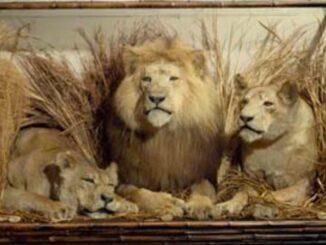 Museo di zoologia di Bologna