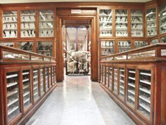 Museo universitario di zoologia e anatomia comparata