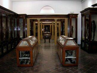 Museo di anatomia di Modena