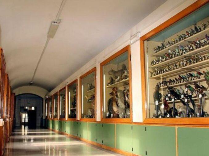 Museo Franchetti - Colibri' del Collegio S. Giuseppe