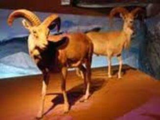 Sezione zoologica Mondo animale