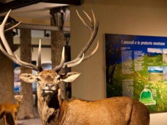 Museo civico di storia naturale di Piacenza