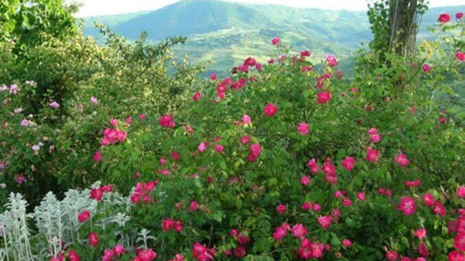 Museo giardino delle rose antiche