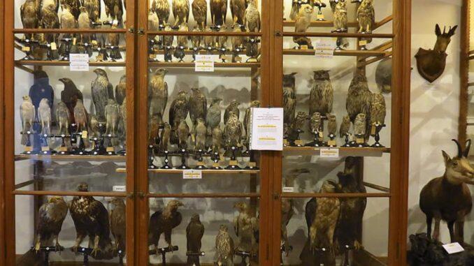 Museo di scienze naturali di Graglia