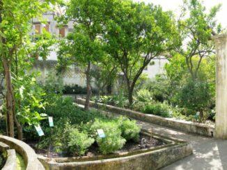 Orto botanico Giardino della Minerva