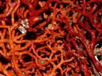 Museo del corallo di Alghero