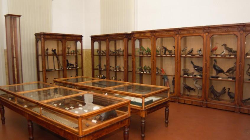 Museo civico di storia naturale di Cremona - Foto abbonamentimusei.it