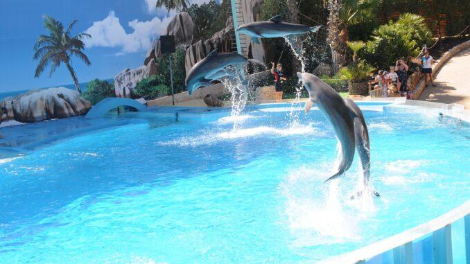 Zoomarine, delfini