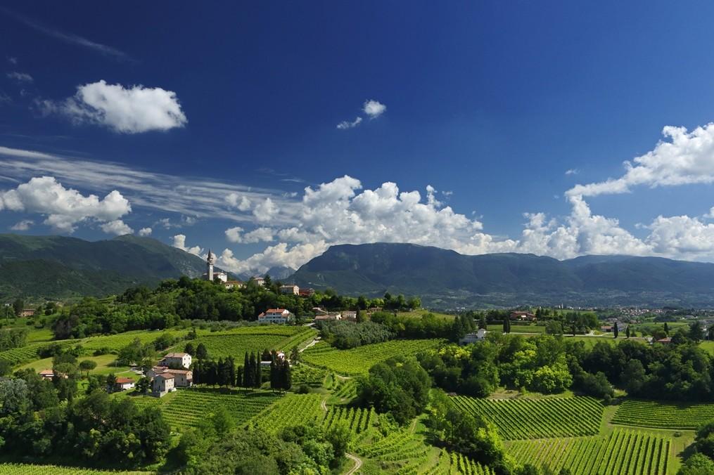 Colline del Prosecco Superiore a Conegliano - Foto Galifi