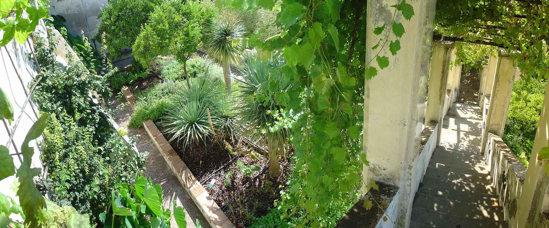 I Giardini della Minerva: orto botanico della Scuola Medica Salernitana
