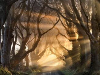 The Dark Hedges, sui luoghi di Game of Thrones