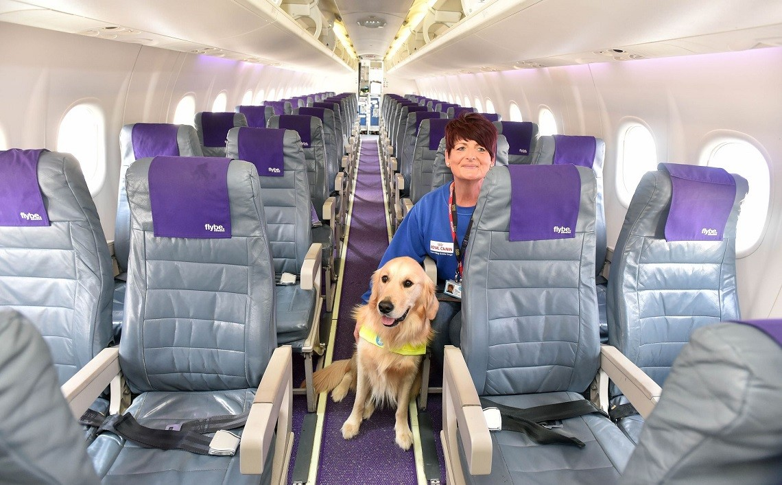 Cane in aereo