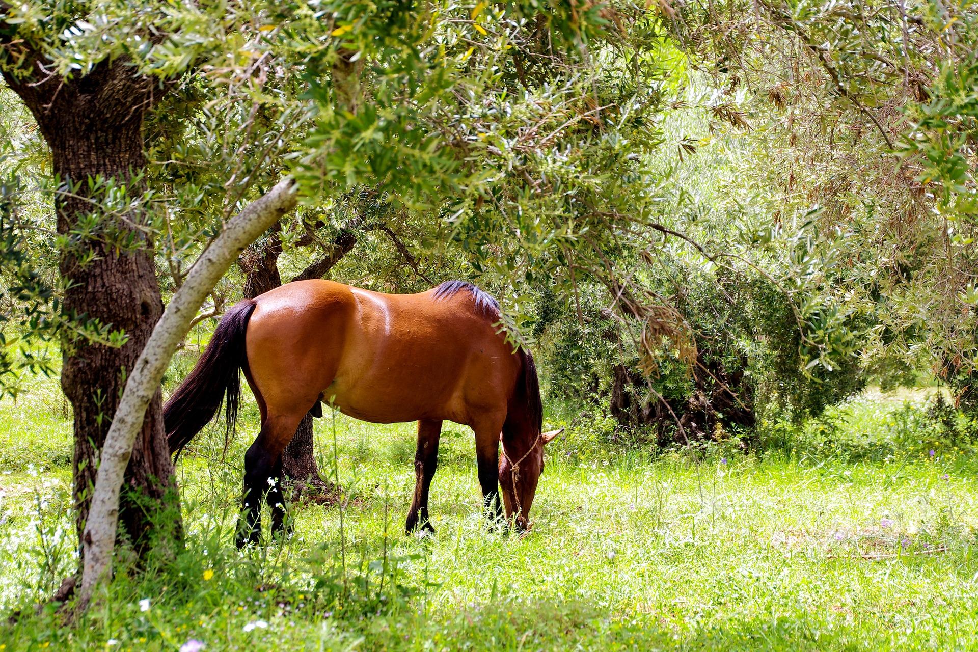 Cavallo libero nel Parco del Pollino - Foto di Valter Cirillo