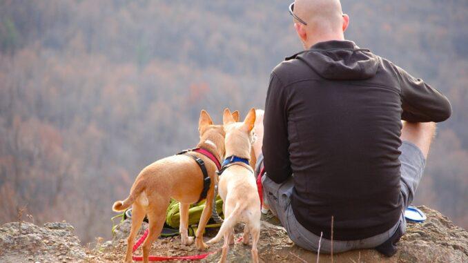 Viaggiare con animali - Foto di msandersmusic