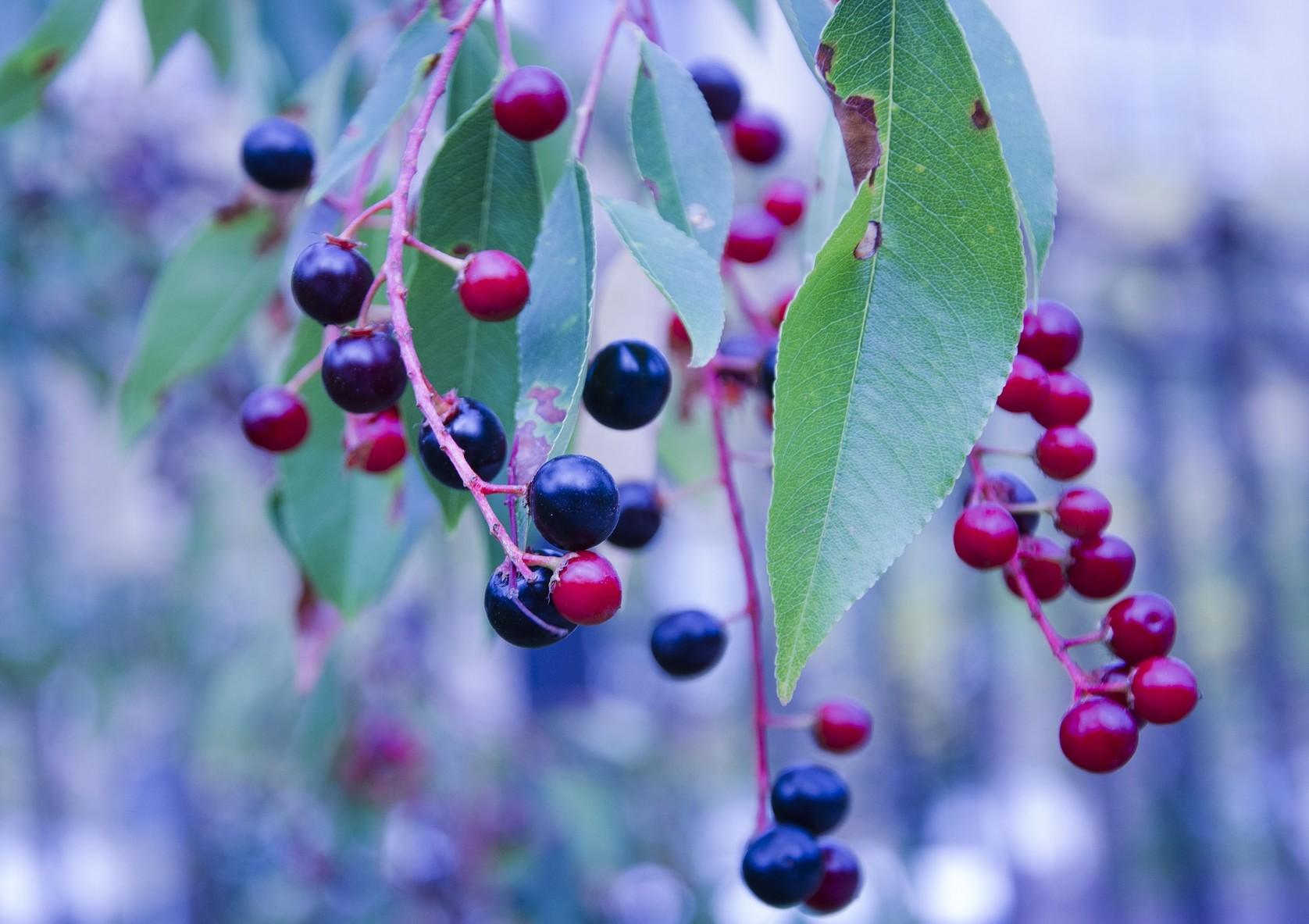 Huckleberry -Foto di Tatiana6
